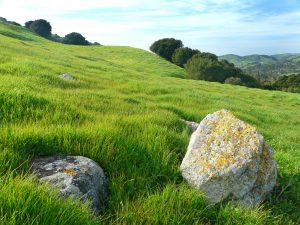 Springtime grassy hillside