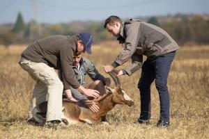 luke gazelle