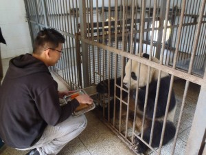 panda boon